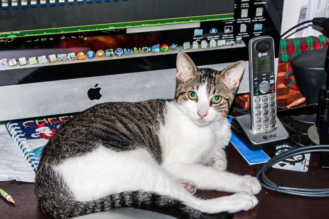 Figaro Amanda Sweetheart Areffi
